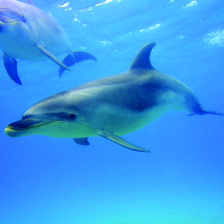 Dolphins in the Bay of Islands